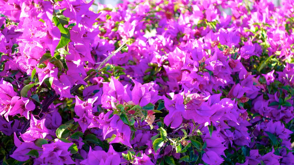 Providenciales showing flowers