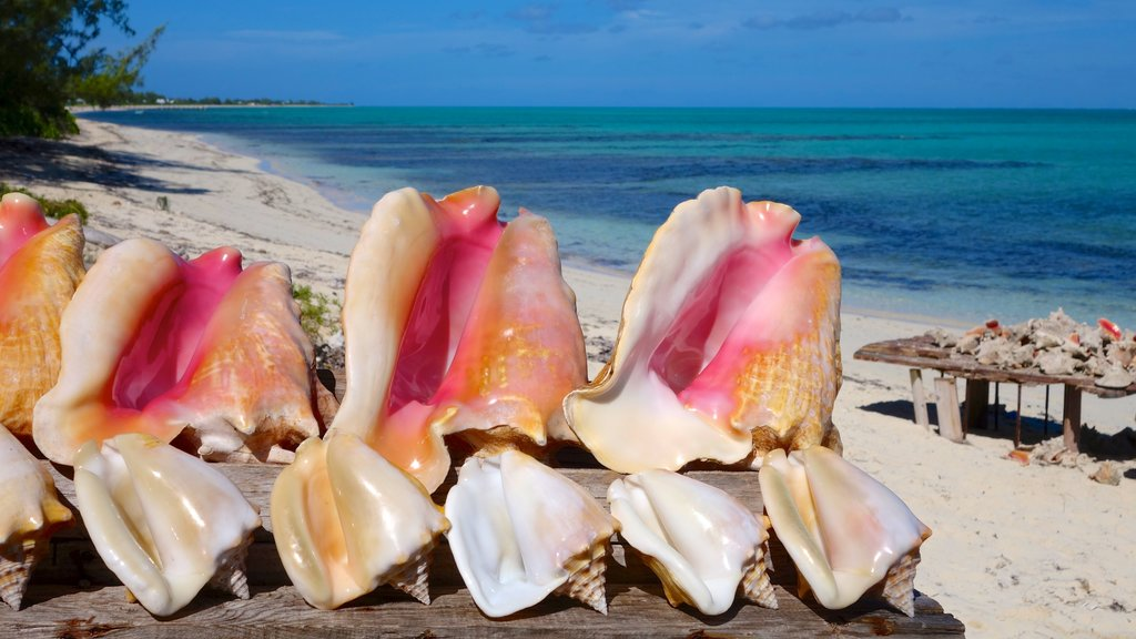 Conch Bar featuring a sandy beach and tropical scenes