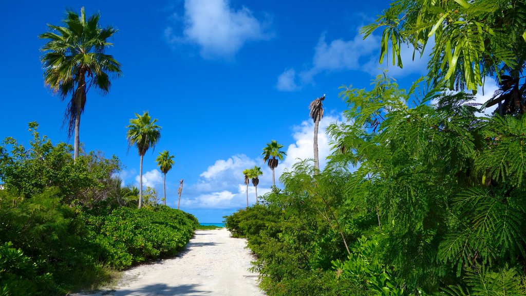 Grace Bay which includes tropical scenes and general coastal views