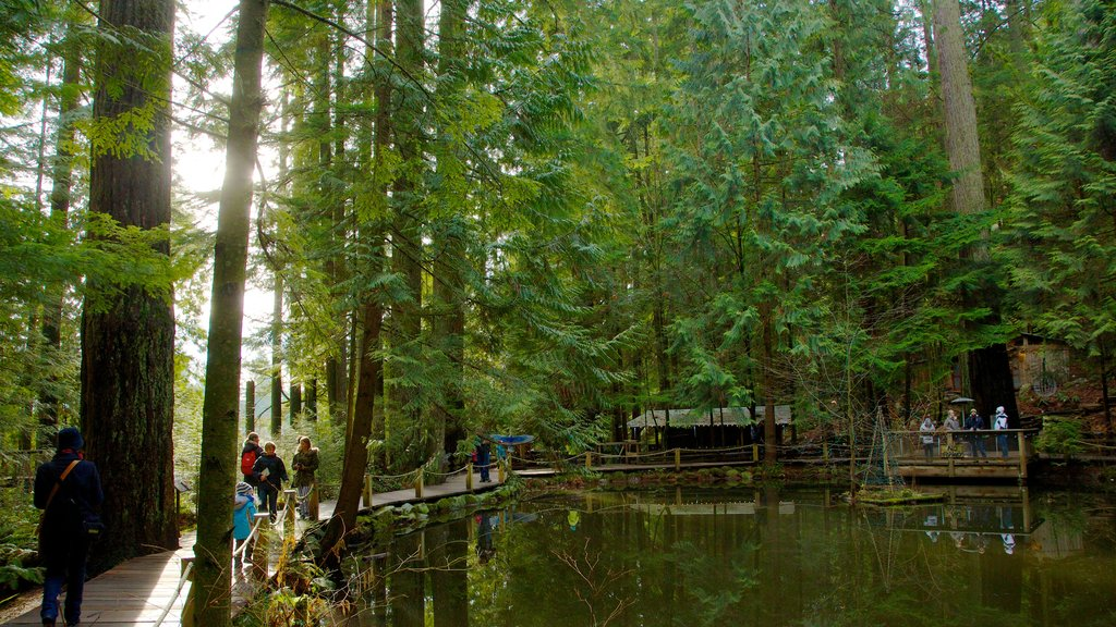 Capilano Suspension Bridge featuring hiking or walking, a bridge and a river or creek