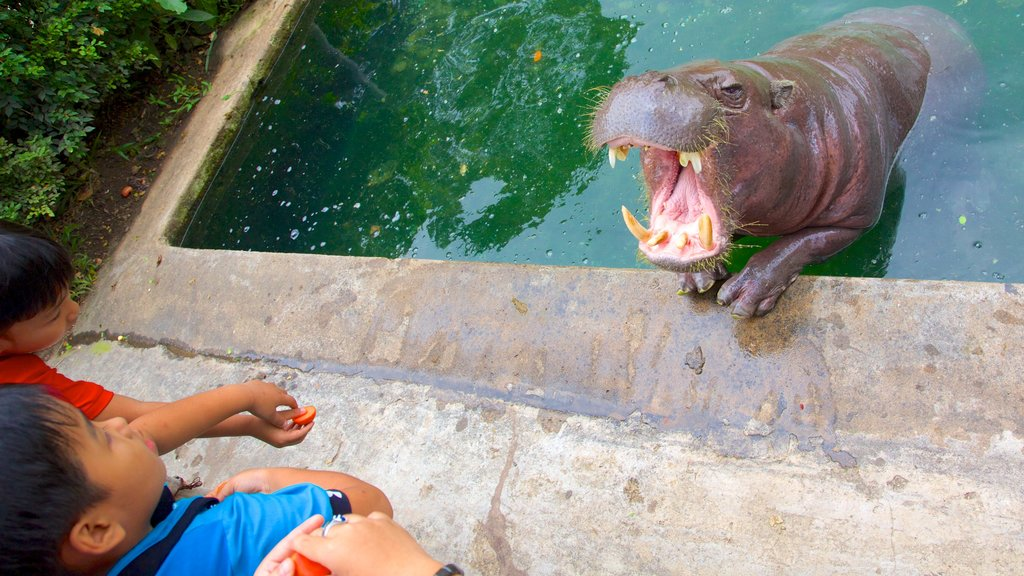 Saigon Zoo and Botanic Garden featuring zoo animals and land animals as well as children