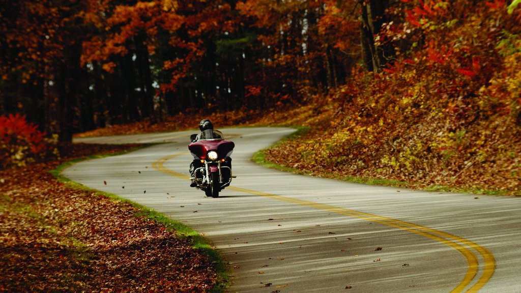 Roanoke featuring forests, motorcycle riding and autumn leaves