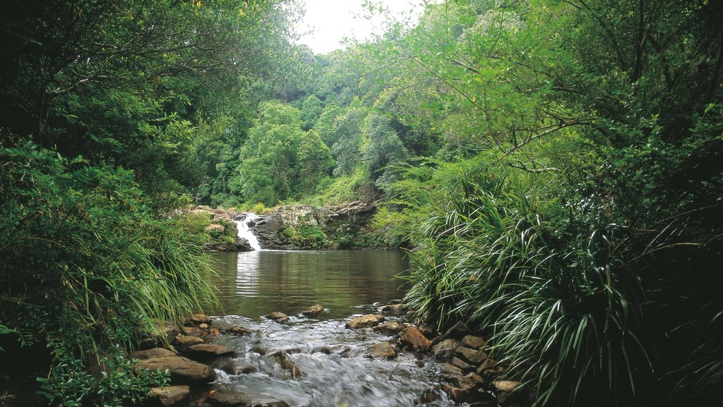 Maleny which includes forest scenes and a river or creek