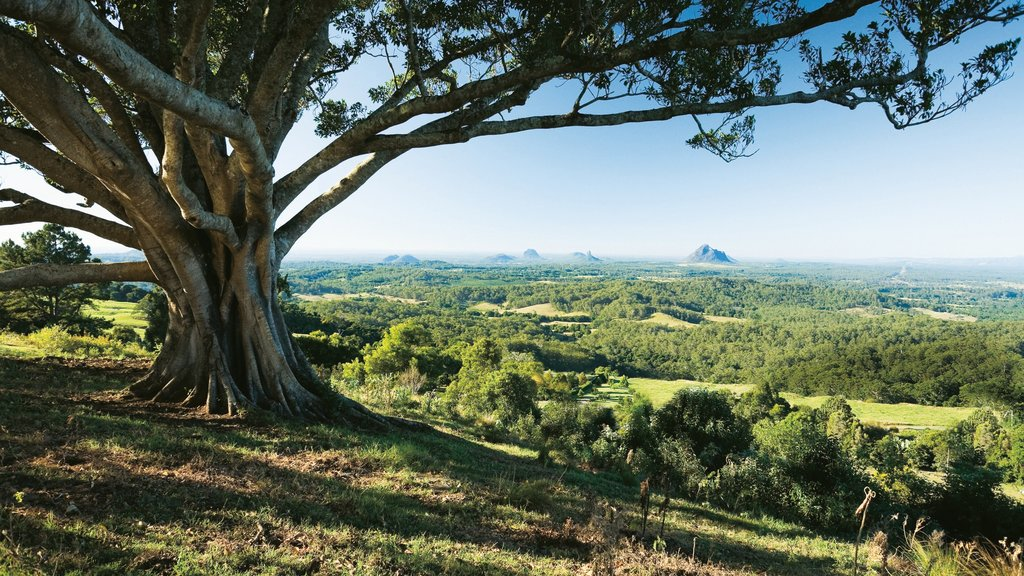 Maleny showing landscape views and tranquil scenes