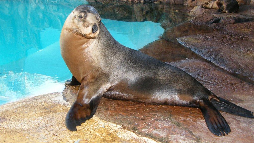 Underwater World Sea Life featuring zoo animals and marine life