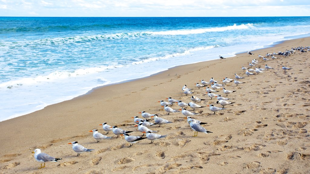 John D. MacArthur Beach State Park which includes a beach, bird life and waves
