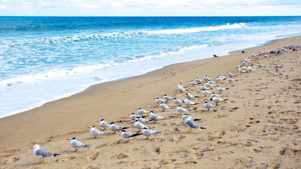 Parque Estatal John D. MacArthur Beach mostrando vida de las aves, una playa y olas