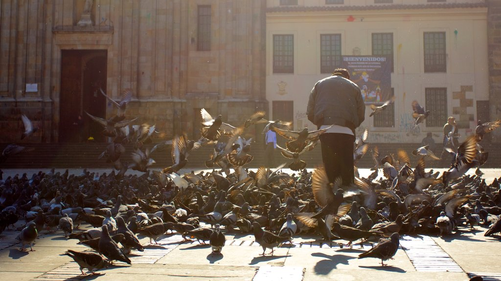 Catedral Primada que inclui vida das aves, uma praça ou plaza e uma igreja ou catedral