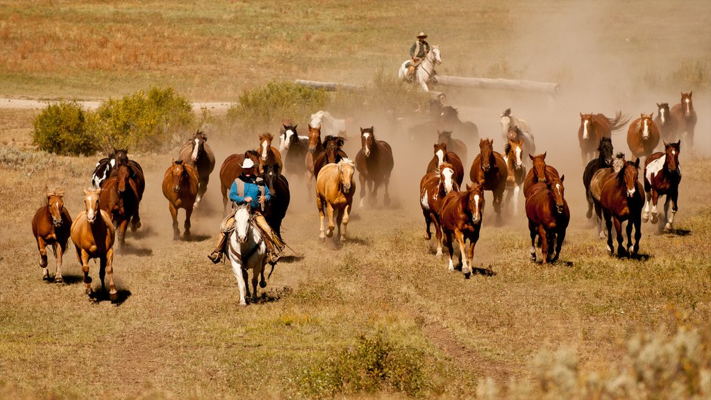 Big Sky Resort showing horseriding, land animals and tranquil scenes