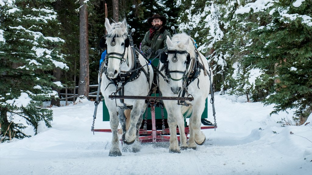 Big Sky Resort featuring horseriding, land animals and snow