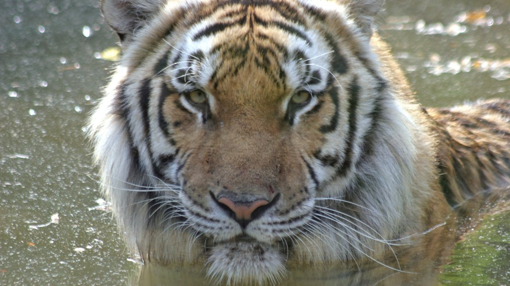 Greensboro which includes dangerous animals and zoo animals