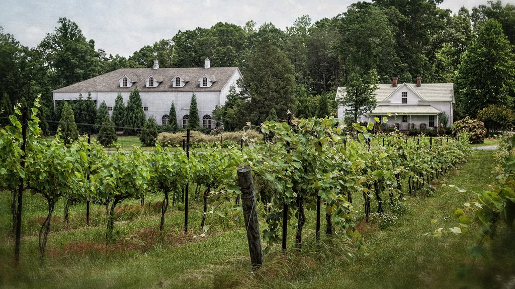 Greensboro showing farmland and a house