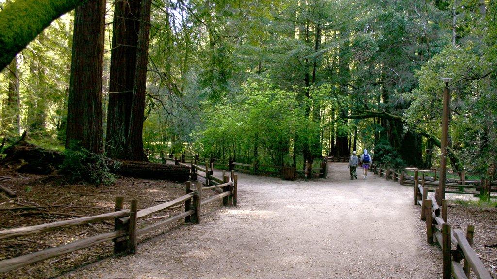 Bay Area ofreciendo bosques, senderismo o caminata y un parque