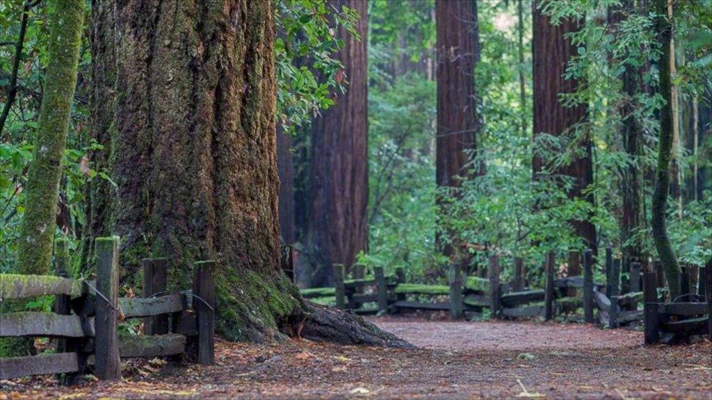 Bay Area que incluye escenas forestales y un parque