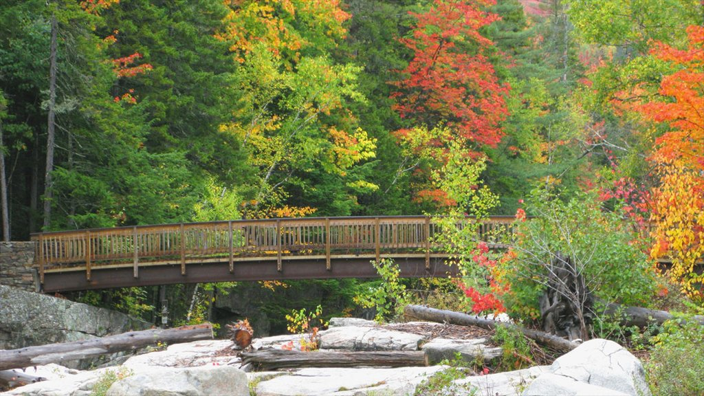 White Mountains showing forests, fall colors and a bridge