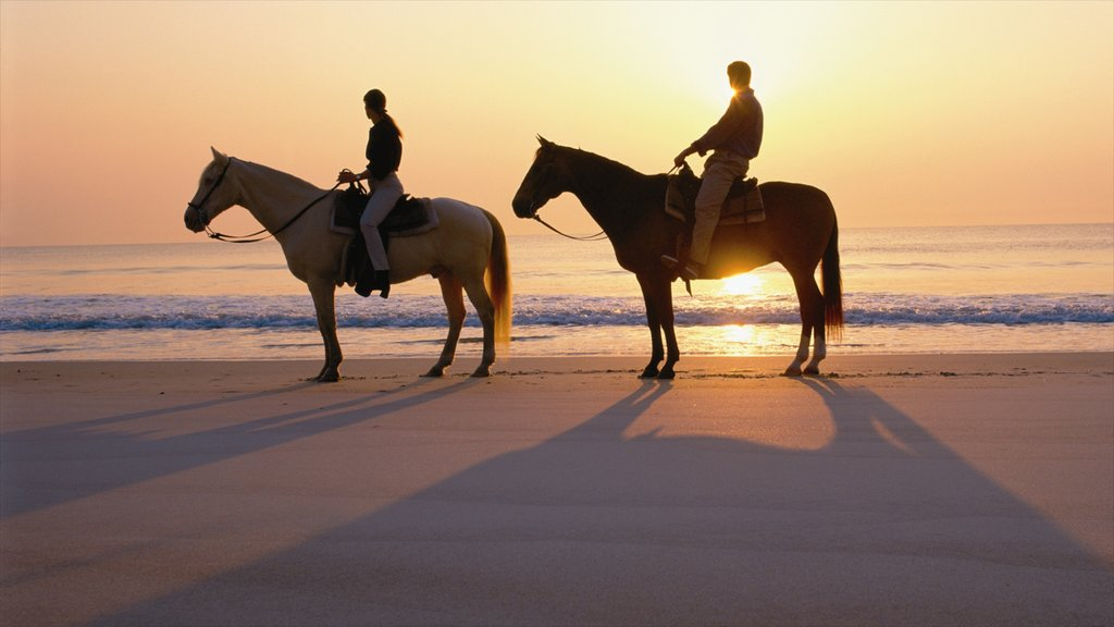 Amelia Island featuring a sunset, horseriding and a beach