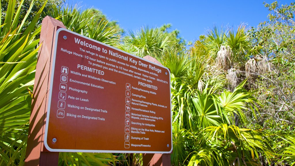 Big Pine Key featuring mangroves and signage