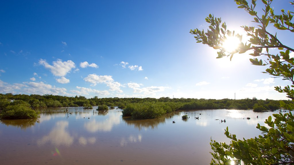 Big Pine Key featuring a lake or waterhole and mangroves