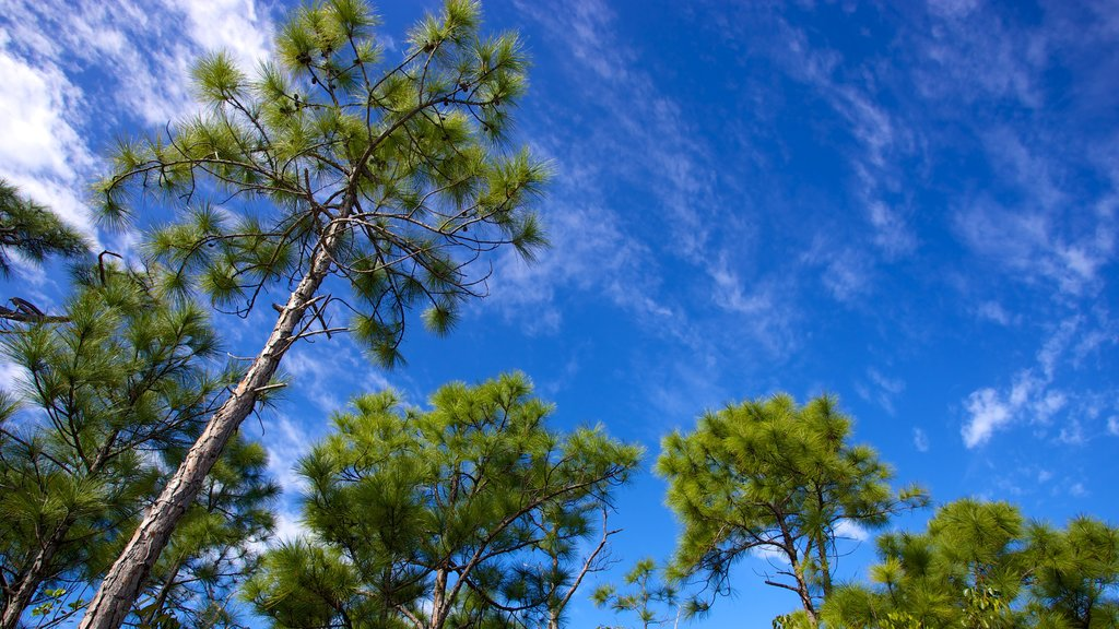 Big Pine Key which includes forest scenes
