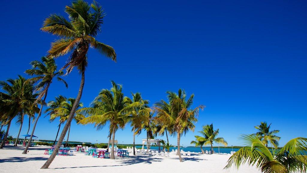Islamorada featuring a beach and tropical scenes