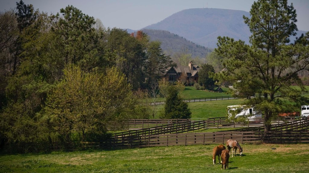 Spartanburg showing a house, land animals and farmland