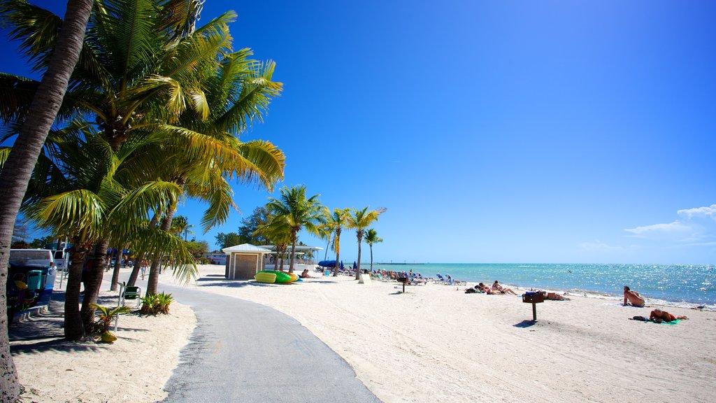 Higgs Beach featuring a beach bar, tropical scenes and a beach
