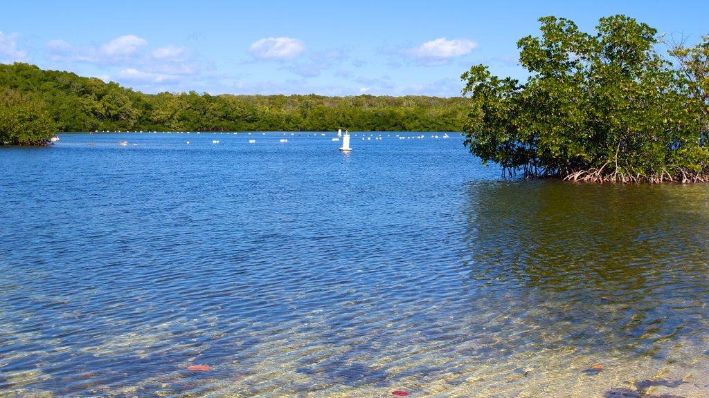 John Pennekamp Coral Reef State Park which includes mangroves, general coastal views and a bay or harbor