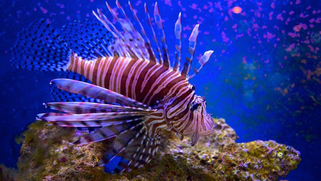 John Pennekamp Coral Reef State Park showing marine life