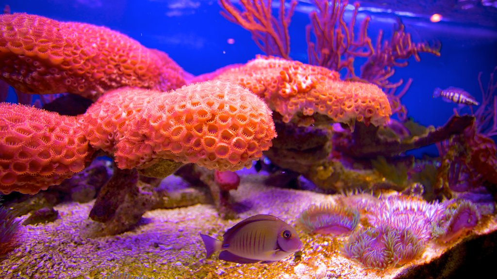 John Pennekamp Coral Reef State Park showing marine life and coral