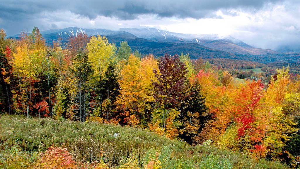 Vermont which includes autumn leaves, landscape views and forests