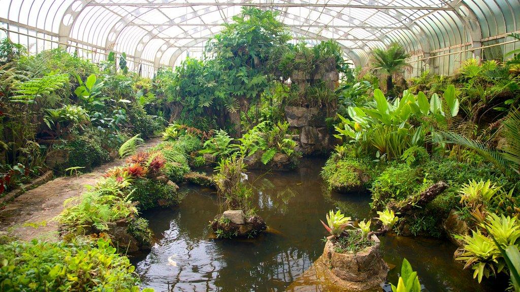 Sao Paulo Botanical Garden showing a garden