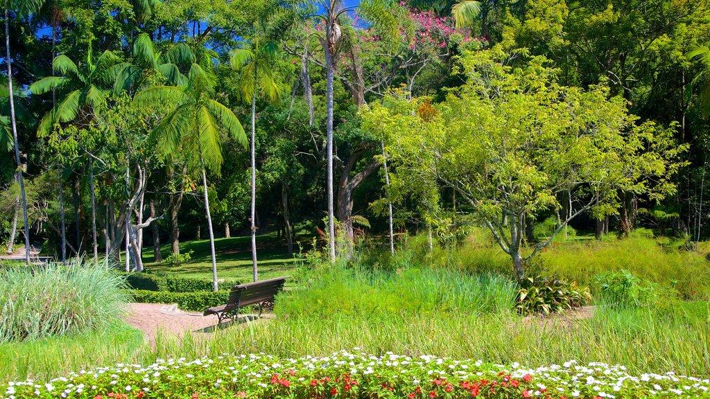 Jardim Botânico de São Paulo mostrando um jardim