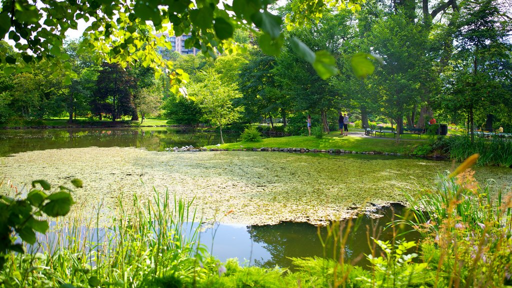 Halifax Public Gardens showing a pond and a garden