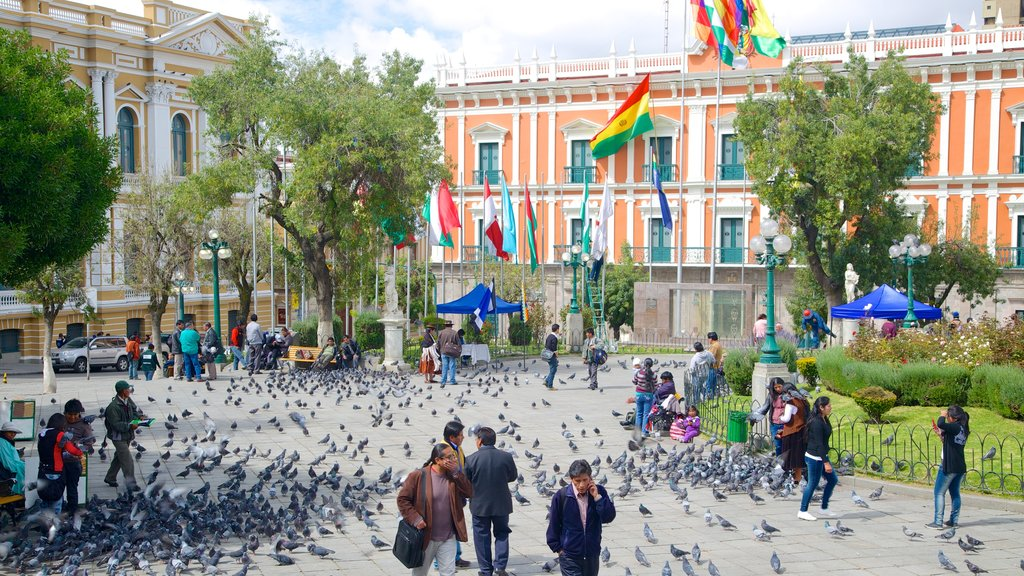 Plaza Murillo which includes bird life and a square or plaza as well as a large group of people