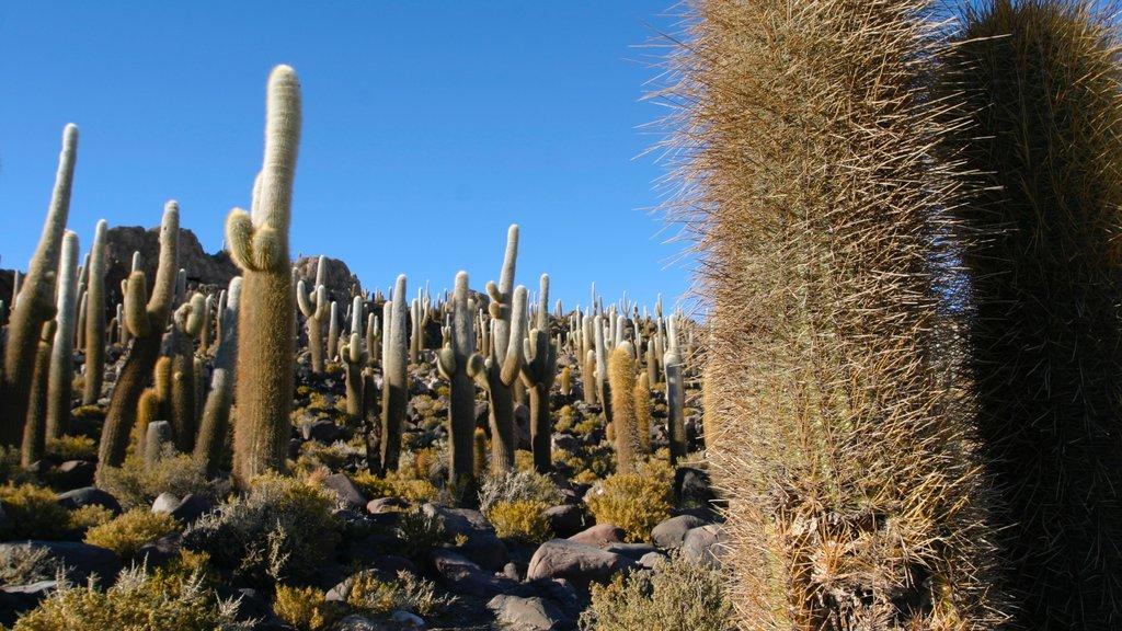 Salar de Uyuni showing desert views