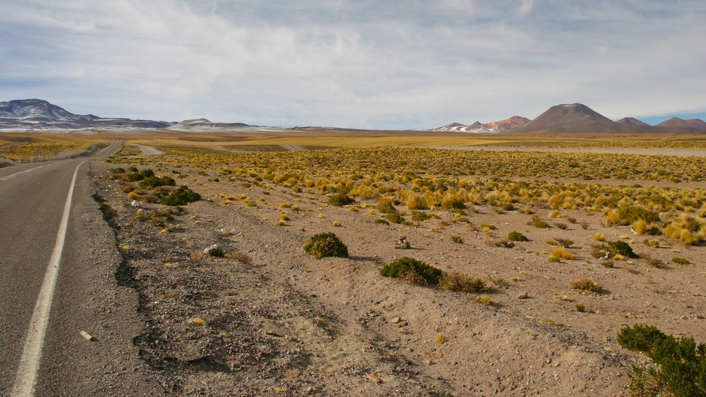 Bolivia which includes landscape views and desert views