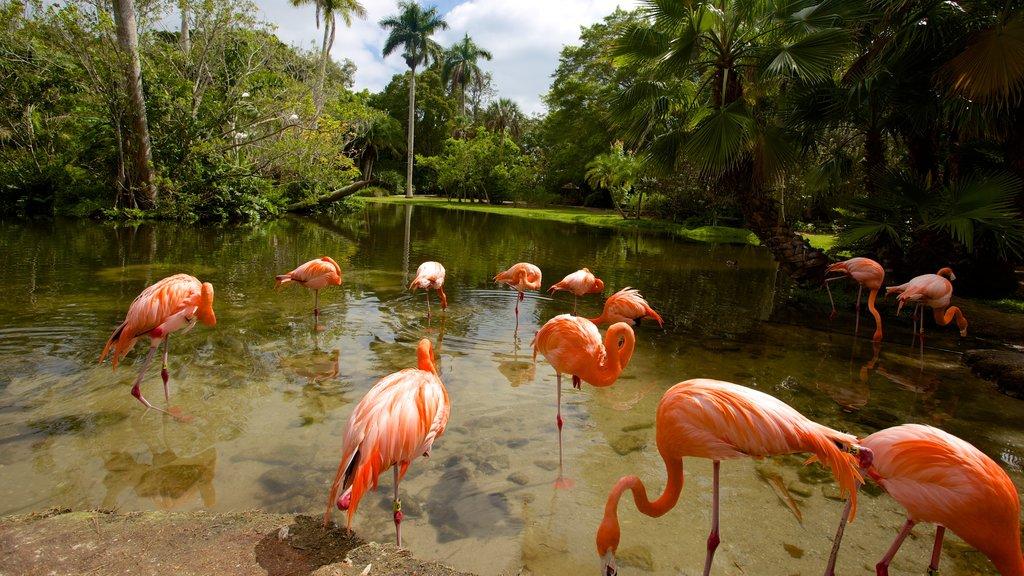 Sarasota Jungle Gardens showing a pond and bird life
