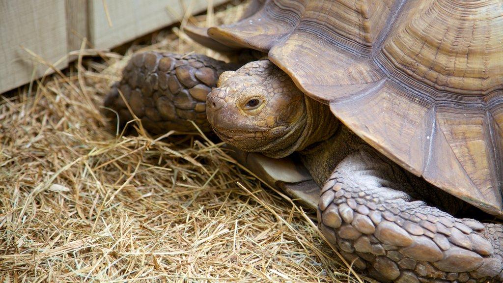 Sarasota Jungle Gardens featuring animals