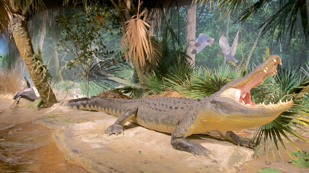 South Florida Museum which includes interior views