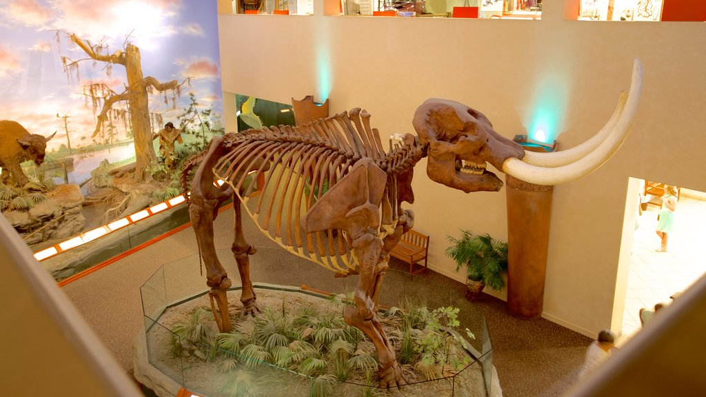 South Florida Museum showing interior views
