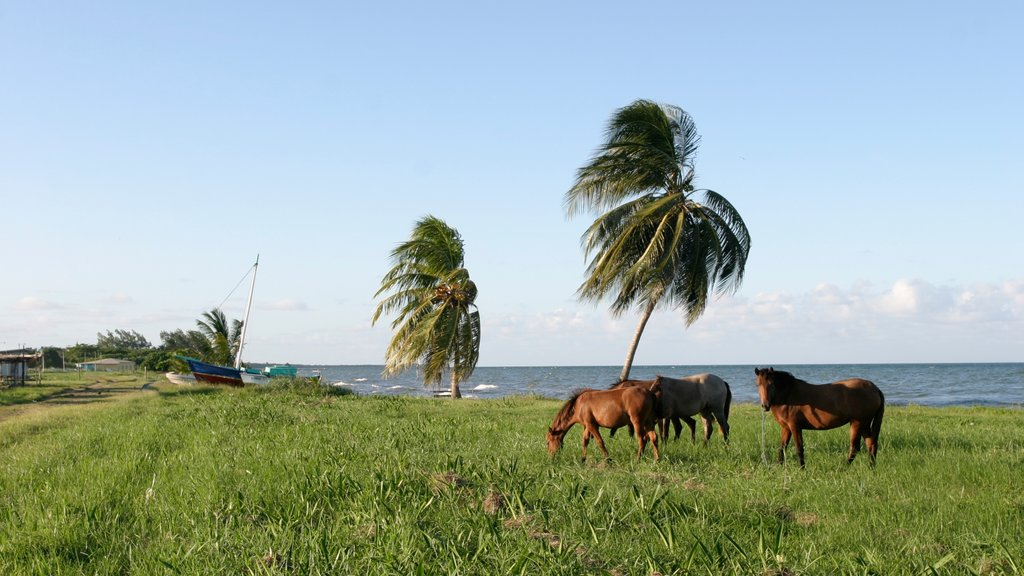 Dangriga showing general coastal views and land animals