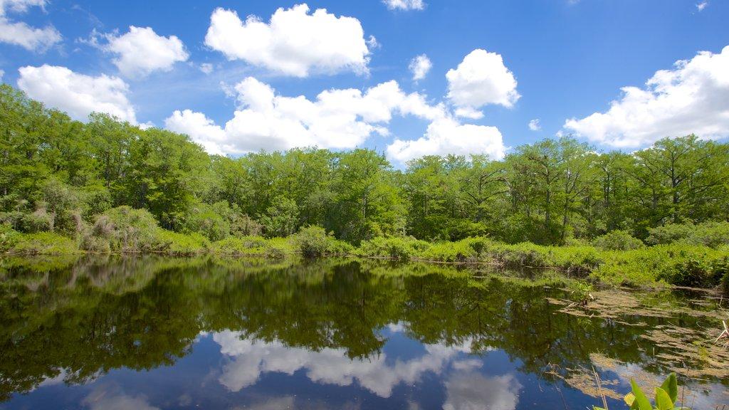 Six Mile Cypress Slough Preserve que incluye bosques y un lago o abrevadero