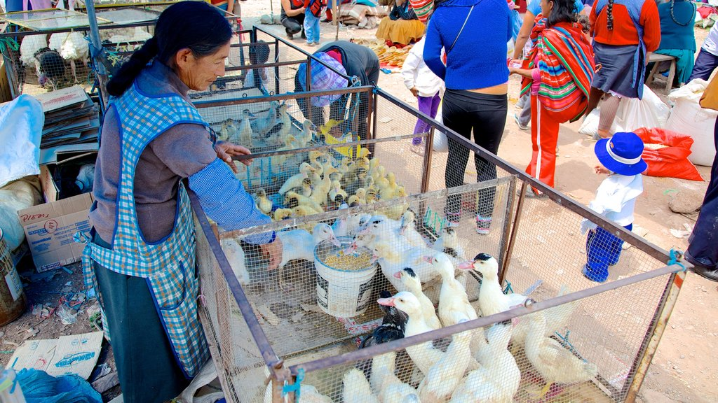 Urubamba featuring bird life and markets as well as an individual femail