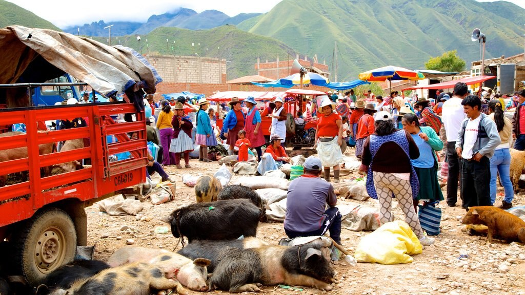 Urubamba showing markets and animals as well as a large group of people