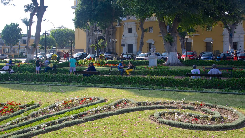 Lima showing a garden and flowers