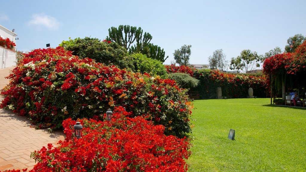 Larco Museum showing a garden and flowers
