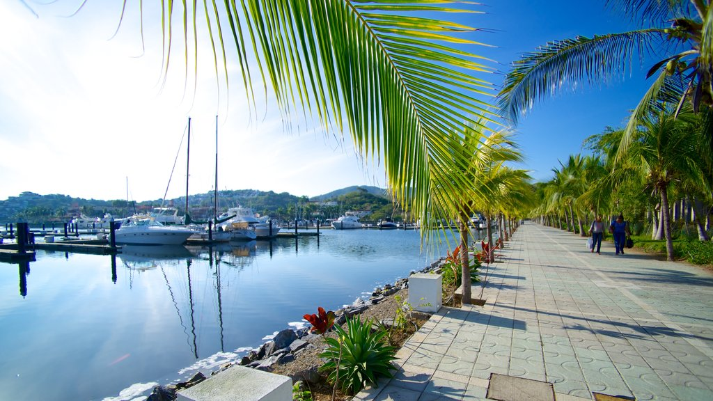 Marina Ixtapa featuring tropical scenes and street scenes