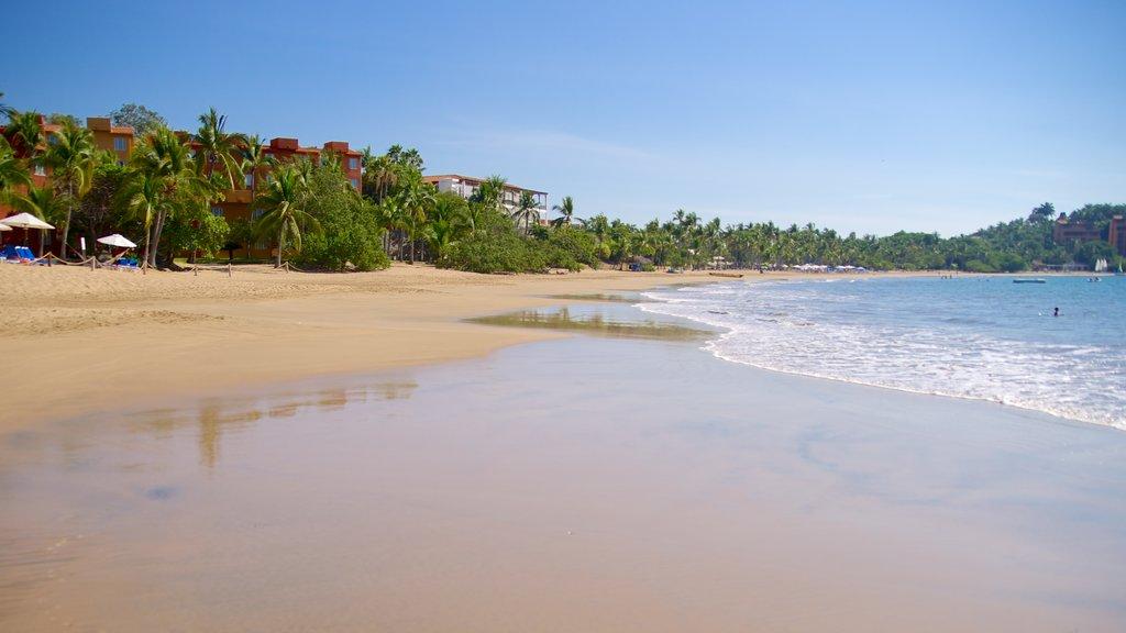 Quieta Beach featuring a sandy beach and tropical scenes