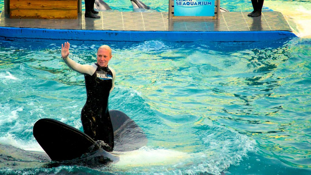 Miami Seaquarium which includes performance art, marine life and a pool