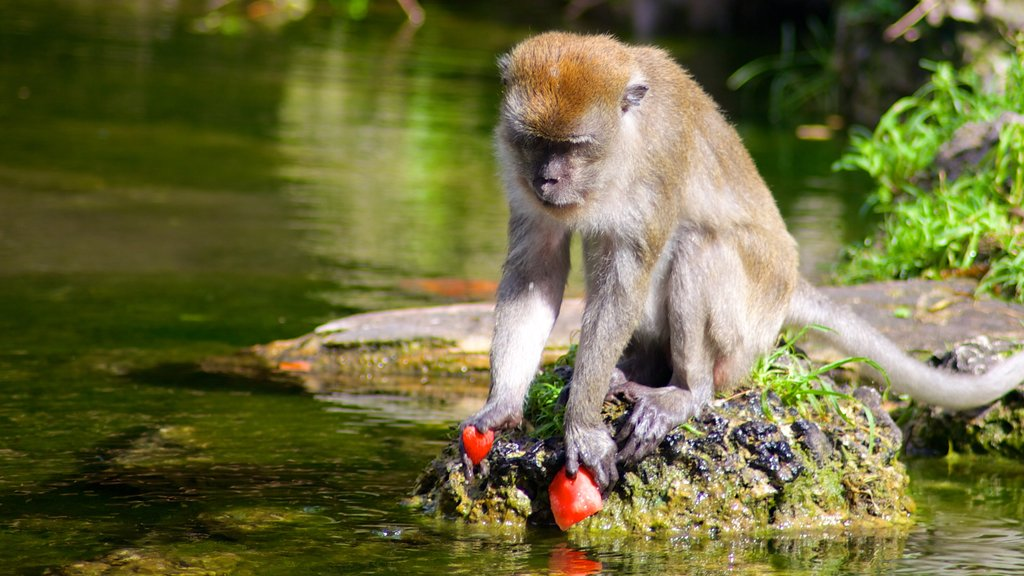 Monkey Jungle which includes zoo animals, a pond and cuddly or friendly animals